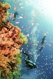 Coral Reef Red Sea, Ras Mohammed Photographic Print