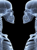 Skeletons, X-ray Artwork Photographic Print by David Mack