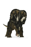 Nedoceratops Dinosaur Print by Walter Myers