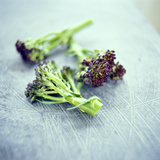 Broccoli Florets Photographic Print by David Munns