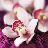 Orchid Flower Photographic Print by David Munns