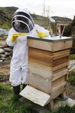 Beekeeper with EpiPen Photographic Print by Cordelia Molloy