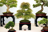 Bonsai Trees Photographic Print by Cordelia Molloy