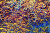 Coloured Radar Image of Mountains In Tibet Photographic Print by  NASA