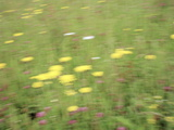 Meadow Flowers Photographic Print by Michael Marten