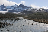 King Penguin Breeding Colony Photographic Print by Charlotte Main