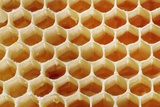 Honey In Wax Honeycomb Cells Photographic Print by Cordelia Molloy