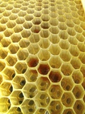 Pollen In Wax Honeycomb Cells Photographic Print by Cordelia Molloy