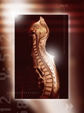 Healthy Spine, MRI Scan Prints by Miriam Maslo