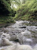 Upland Stream Photographic Print by Michael Marten
