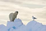 Polar Bear And Seagull Papier Photo par Louise Murray