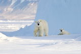 Polar Bear Mother And Cub Photographic Print by Louise Murray
