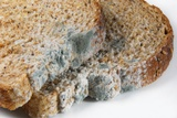 Mouldy Bread Posters by Cordelia Molloy