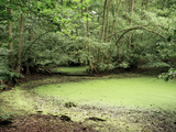 Algal Bloom In Pond Photographic Print by Michael Marten