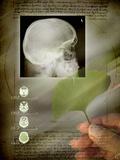 Ginkgo In Medicine Photographic Print by Miriam Maslo