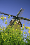 Windmill Photographic Print by Chris Martin-Bahr