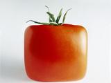 Square Tomato Photographic Print by Cordelia Molloy
