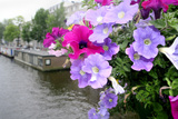 Petunia Flowers Over a Canal Photographic Print by Chris Martin-Bahr
