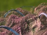 Intestinal Parasites, Artwork Photographic Print by David Mack