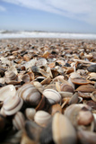 Assortment of Sea Shells Photographic Print by Chris Martin-Bahr