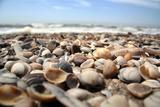 Assortment of Sea Shells Reprodukcja zdjęcia autor Chris Martin-Bahr