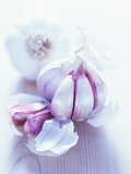 Garlic Bulbs Premium Photographic Print by David Munns