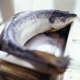 Salmon Photographic Print by David Munns