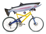 Fish on a Bicycle Premium Photographic Print by Tony McConnell