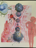 Collage Artwork of Cells of the Immune System Photographic Print by Hans-ulrich Osterwalder
