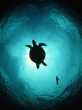 Turtle Swimming Photographic Print by Matthew Oldfield