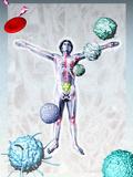 Immune System Components Photographic Print by Hans-ulrich Osterwalder