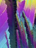 Caffeine Crystals, Light Micrograph Foto von  PASIEKA