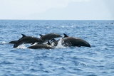 Indo Pacific Bottlenose Dolphins Photographic Print by Louise Murray