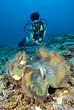 Diver And a Giant Clam Photographic Print by Matthew Oldfield