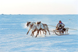 Reindeer Racing, Russian Lapland Photographic Print by Ria Novosti