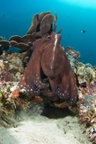Day Octopus Fotoprint van Matthew Oldfield