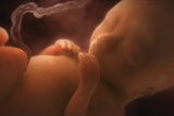Human Foetus In the Womb, Artwork Photographic Print by Jellyfish Pictures