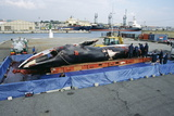 Dead Fin Whale Prints by Alexis Rosenfeld