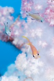 Anthias In Soft Coral Photographic Print by Matthew Oldfield