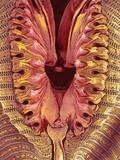 Fly Proboscis, SEM Photographic Print by Susumu Nishinaga