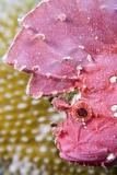 Leaf Scorpionfish Prints by Matthew Oldfield