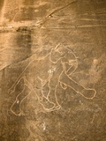 Petroglyph of Running Elephant, Libya Photo by David Parker