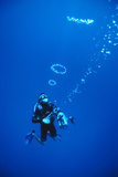 Diver Blowing Bubbles Posters by Matthew Oldfield