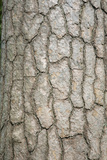 Pine Tree Bark Photographic Print by Rapson Rapson