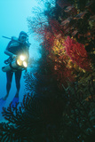 Scuba Diver Photographic Print by Alexis Rosenfeld