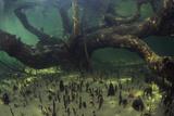 Mangrove Swamp Poster by Alexis Rosenfeld