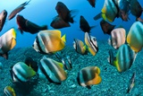 Tropical Reef Fish Print by Matthew Oldfield
