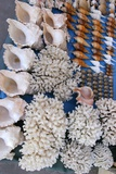 Seashell Trade Reprodukcja zdjęcia autor Alexis Rosenfeld