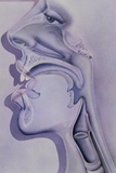 Artwork of the Nose, Mouth And Throat In Profile Print by Hans-ulrich Osterwalder