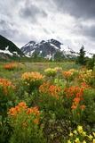 Mountain Meadow, Canada Photographic Print by David Nunuk